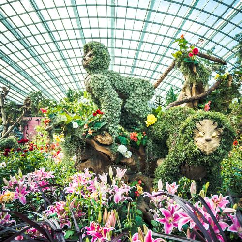 Gardens By The Bay Dahlia Dreams