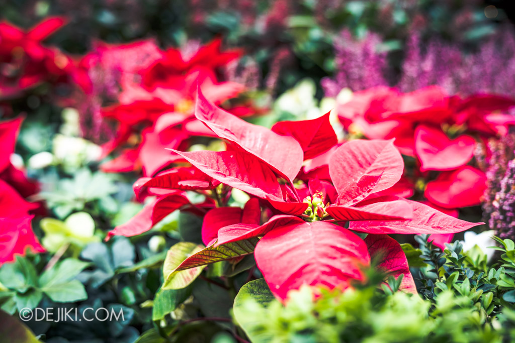 Gardens by the Bay Singapore Christmas 2018 - Poinsettia Wishes featuring Disney Tsum Tsum - Flower field 1