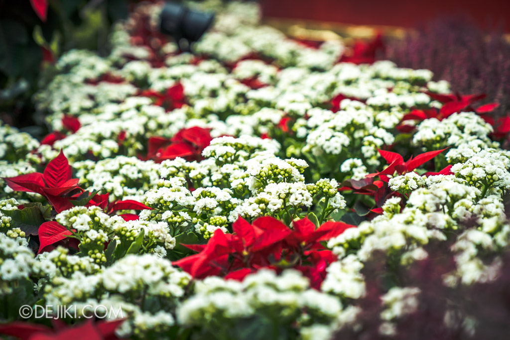 Gardens by the Bay Singapore Christmas 2018 - Poinsettia Wishes featuring Disney Tsum Tsum - Flower field 2