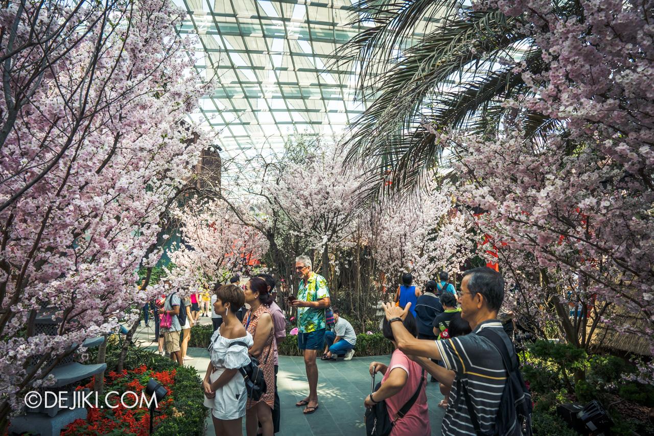 Gardens by the Bay Sakura Matsuri 2020 Flower Field lush junction 1