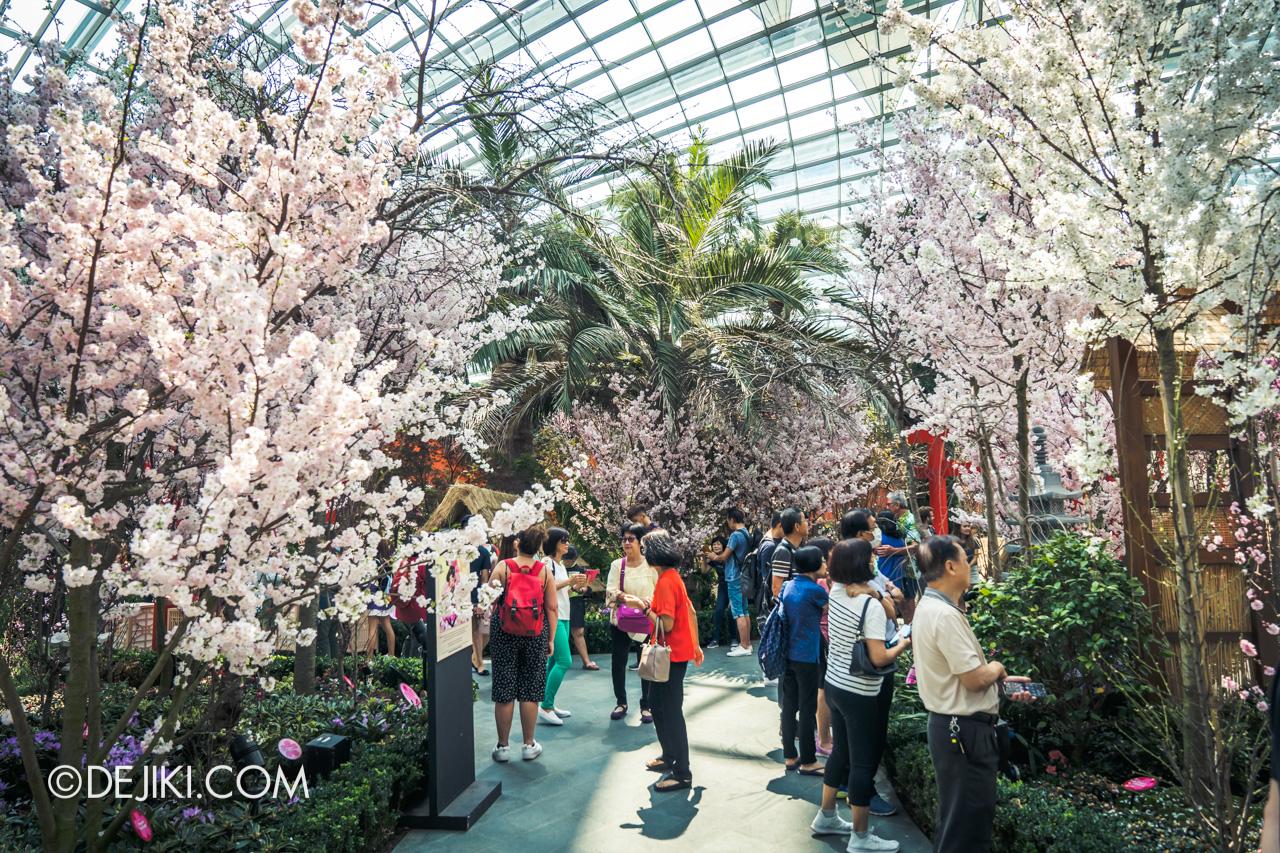 Gardens by the Bay Sakura Matsuri 2020 Flower Field lush junction 2