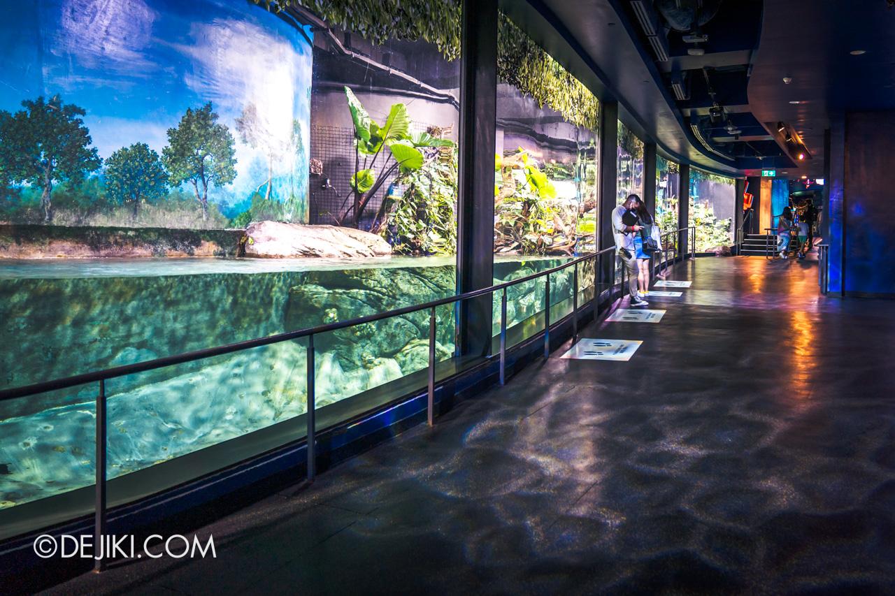 SEA Aquarium 2021 3 Ocean Diversity Sturgeons