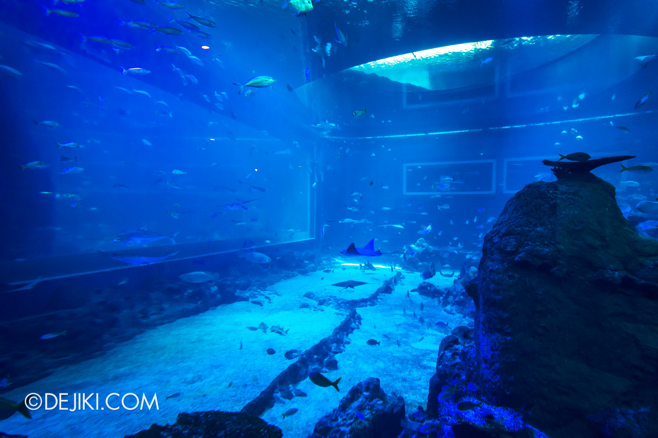SEA Aquarium 2021 4 Open Ocean Dome View