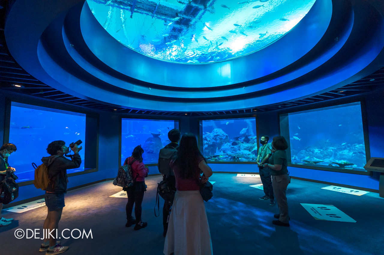 SEA Aquarium 2021 4 Open Ocean Dome