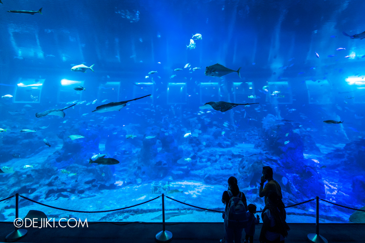SEA Aquarium 2021 4 Open Ocean Wide View