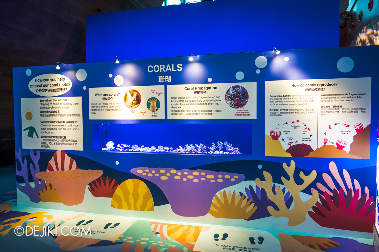 SEA Aquarium 2021 8 Coral Conservation